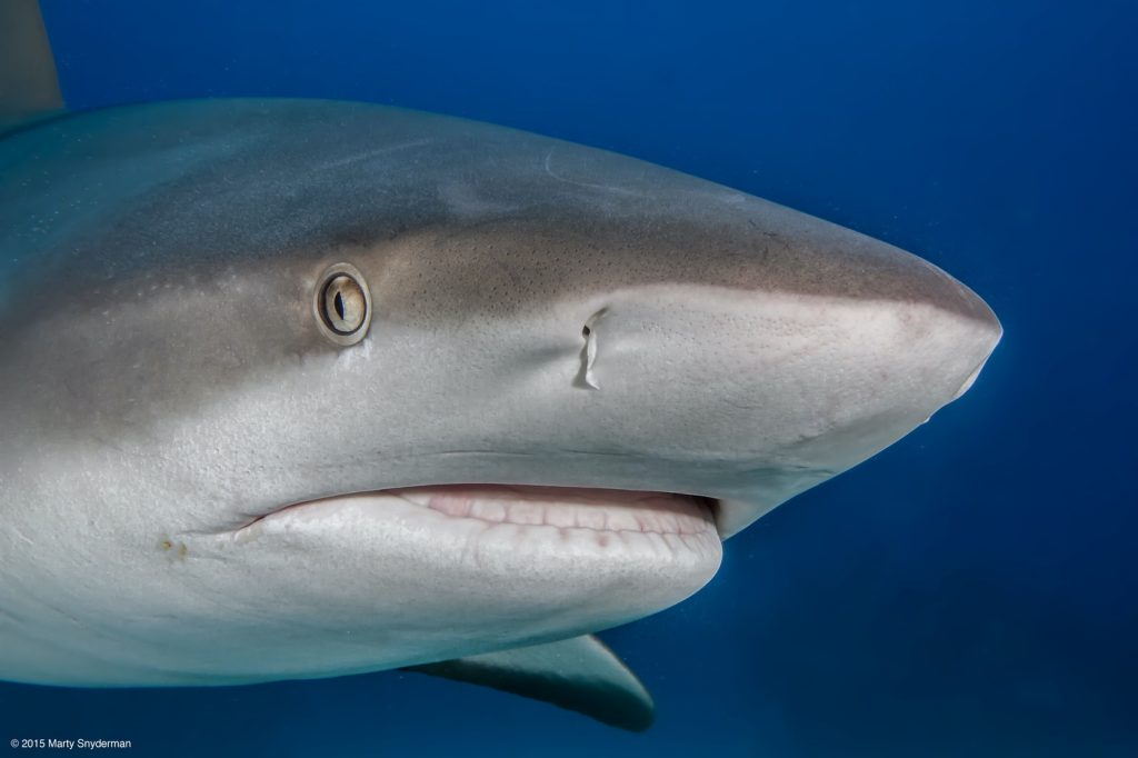 20150920_Caribbean_reef_sharks_01-22-Edit